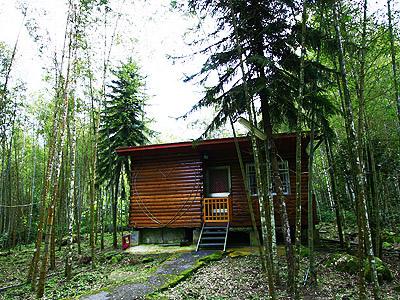 竹林中的度假野趣 聽著自然的脈動入眠